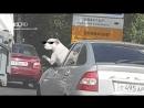 В Екатеринбурге заприметили породистого водителя с хвостом