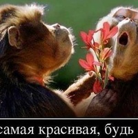 Анкета Андрей Антонов
