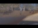 В мире животных Гандурасы