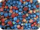 Лесные ягоды(черника, голубика, брусника, костяника, клюква)