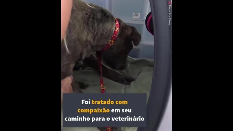 Anjos da guarda encontram um cachorro velho cego em um ferro velho uma transformação incrível começa