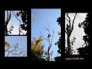 Распил дерева Арбористом - Железный Дровосек