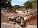 ПРОГУЛКИ С ДИНОЗАВРАМИ БАЛЛАДА О БОЛЬШОМ АЛЕ (Walking with Dinosaurs The Ballad of Big Al). ЧАСТЬ 2