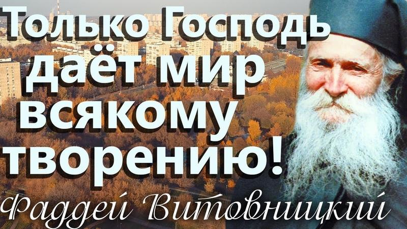 Только Господь даёт Мир всякому творению! Старец Фаддей Витовницкий
