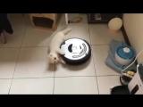 Зверское нападение кота на пылесос (VHS Video)