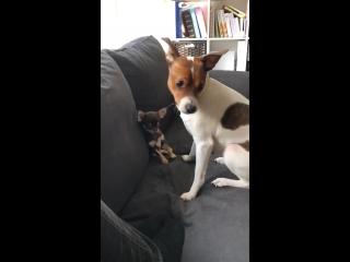 Fifi og Coco