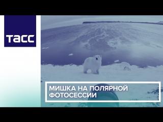 Мишка на полярной фотосессии