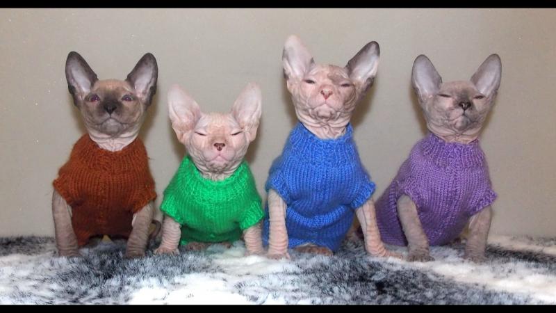 Обзор свитерочков и реклама котят