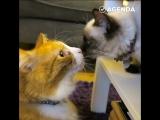 Как знакомятся котики друг с другом