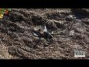 На Херсонщині загинуло 5000 птахів від пастерелезу