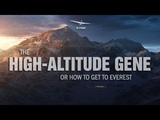 THE GENE OR HOW TO GET TO EVEREST