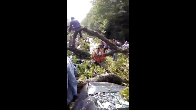 Возле посёлка ЛОО, огромное дерево упало прямо на трассу повредив две легковушки и перегородив движение транспорта.
