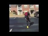 Черная пантера (VHS Video)