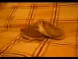 Вот как ежики занимаются сексом))