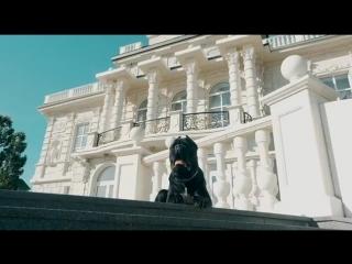 Собака на фоне Дворца бракосочетания ))
