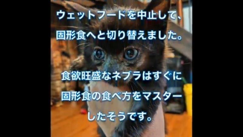 生死の境を彷徨っていた子猫が元気を取り戻し成長すると、顔の毛の色が変わっていき…