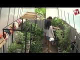 Учитель истории выращивает в Чердаклинском районе бананы... http://ulpravda.ru