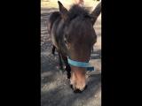 История о том, как меня конь укусил.