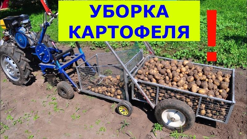 Супер сбор урожая картофеля. Модернизация мотоблокопоезда: сам копает, собирает и везет.