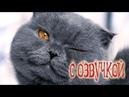 Приколы с котами – озвучка животных – Моменты из жизни кота Мурзика – Domi Show