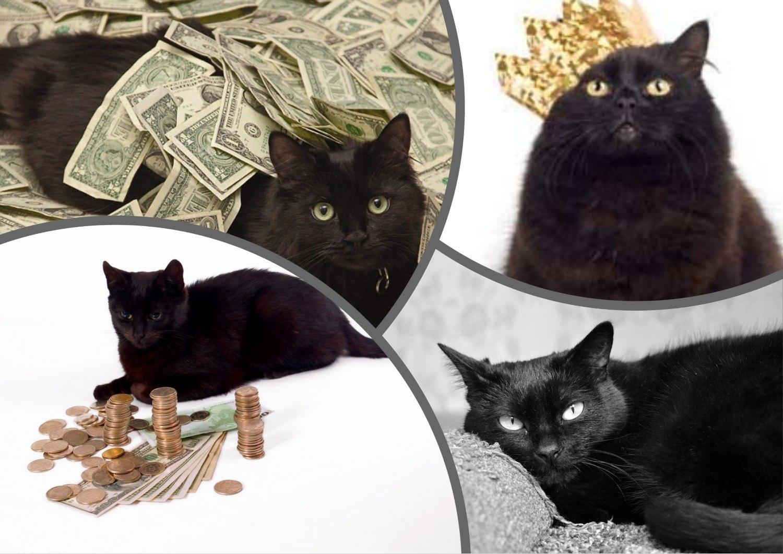 Богатый кот Блэки