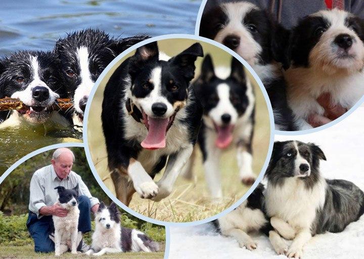 Тина И Кейт — собаки богачи
