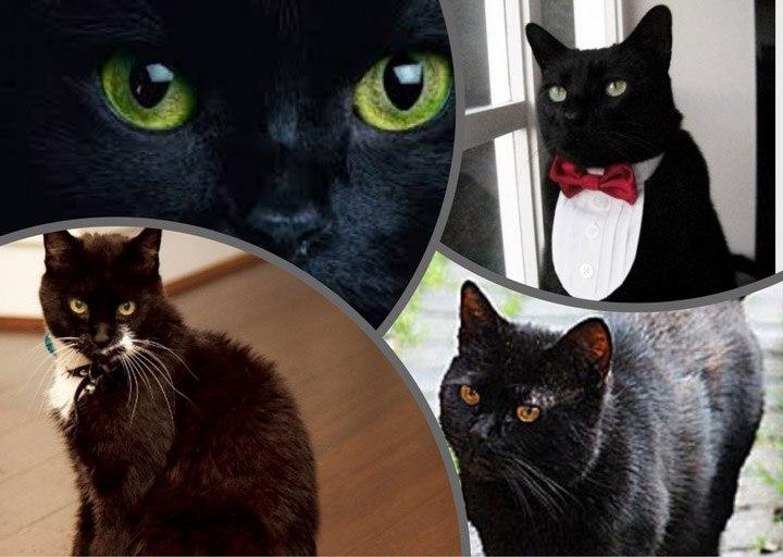 Тинкер — богатая кошка