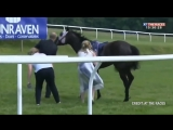 Watch moment of incredible bravery as At The Races presenter Hayley Moore heroically throws herself