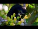 03-Нетронутые уголки дикой природы. Амазония.