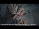Кастрация суки (стерилизация собаки)
