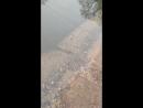В пруду барнаульского парка Изумрудный погибла вся рыба