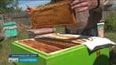 Погода против пчеловодов Каким будет урожай мёда в Башкирии