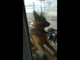 Бошая собака