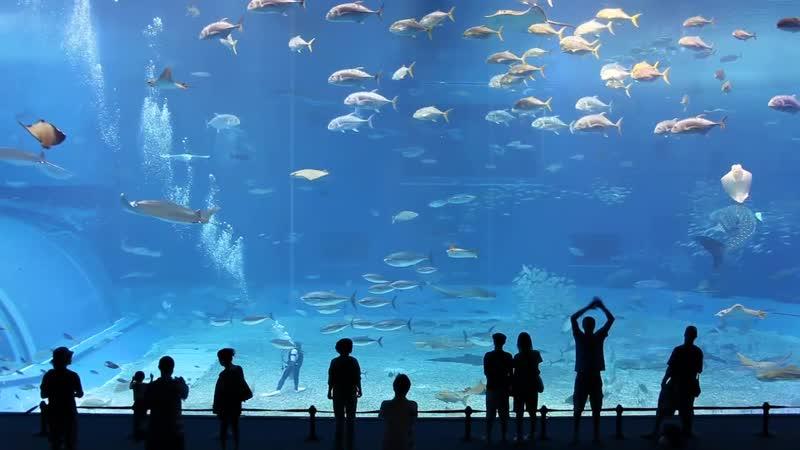 Море Куросио - 2-й по величине аквариум в мире