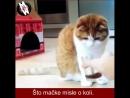 Mačje mišljenje o koli