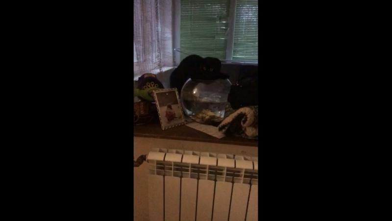 Кот хочет по пить воды из оквариума