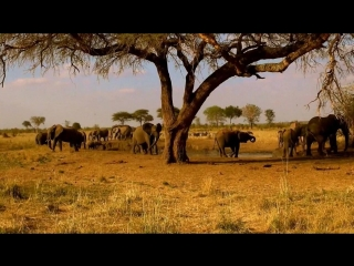 Сафари по национальному парку Тарангире, Занзибар, Танзания.