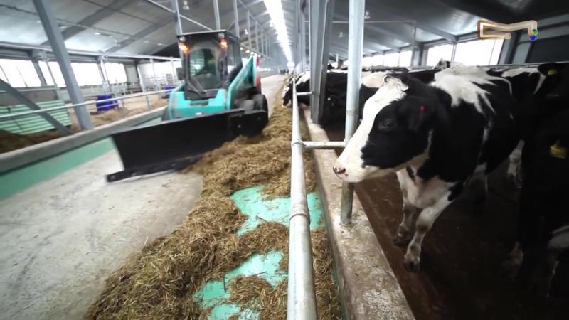Прибыльное молочное животноводство