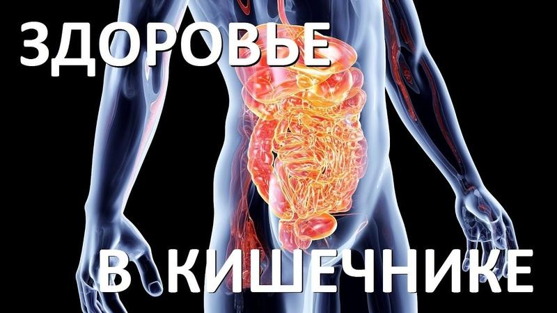 3 Здоровье в кишечнике Адекватное питание 2017 Замалеева Г А