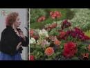 Концерт в Парк Искусств Музеон на VII Московском международном фестивале садов и цветов!
