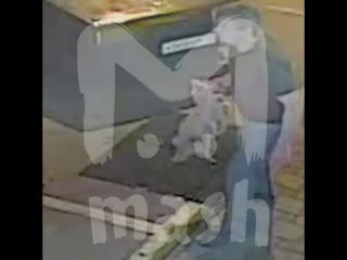 Житель Краснодарского края избил собаку, которая ждала хозяина у магазина