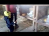 Страусиная ферма 020518