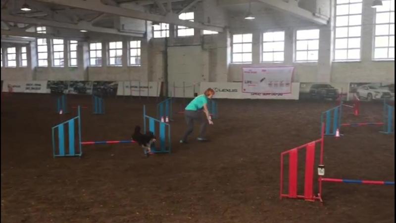 Бессонова Ольга и шелти Искра А3 17 18 06 18 отборочные в Перми