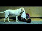 Dog's Unconditional Love - Hearty Paws
