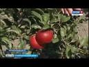 Яблоневый сад в подарок внуку