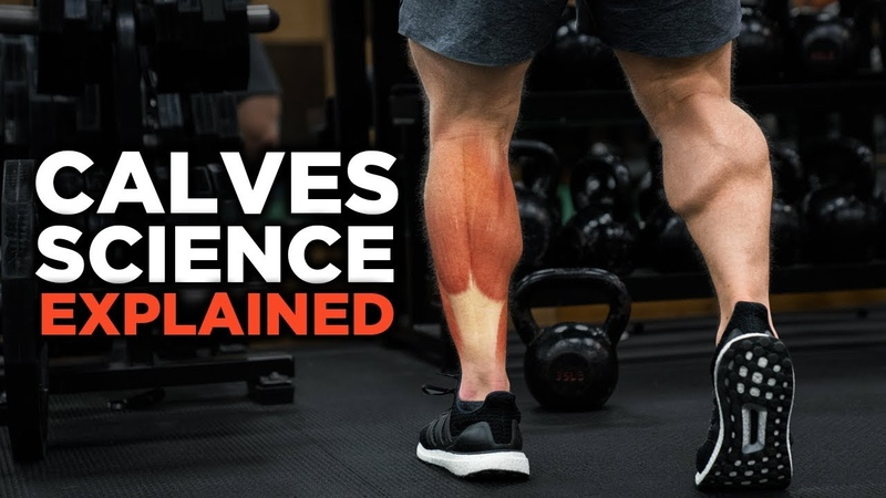 The Most Scientific Way to Train CALVES in 2018 (Science Explained)