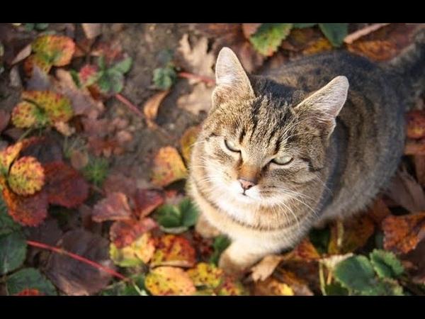 Поругалась с мужем говорю кота забираю и ухожу но не тут то было