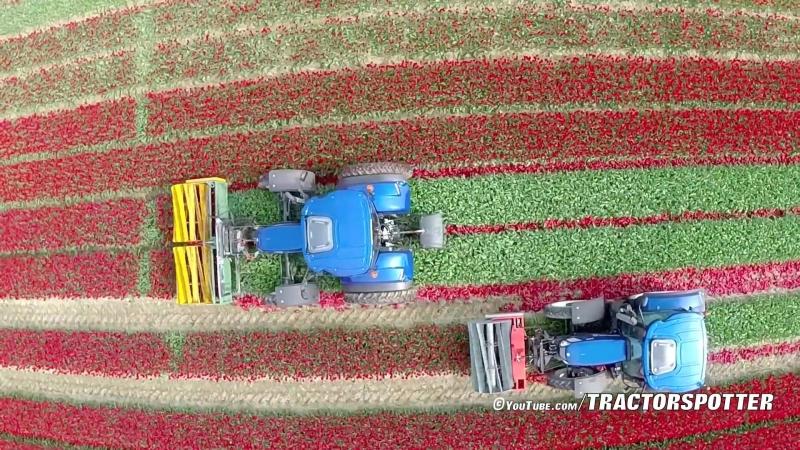 Topping Tulips ⁄ Tulpen koppen ¦ 2x New Holland T6.160 Blue Power ¦ Maliepaard Bloembollen