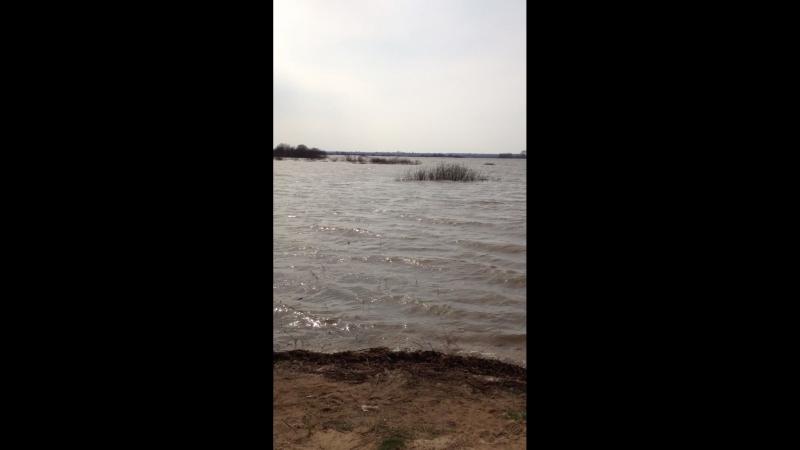 Озеро Велье 21 апреля превратилось в море дачные зарисовки