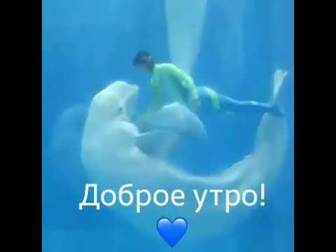 Доброе утро с дельфинами